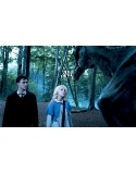 Cat.1 - 10 Jan. 2021 - PARIS - Harry Potter and the Order of the Phoenix - PARIS - Concert ticket